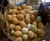 Eggs-one-basket